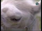 В мире животных с Николаем Дроздовым канал
